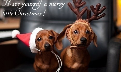 56391-A-Merry-Little-Christmas